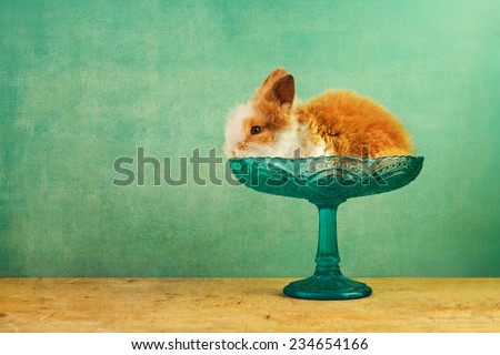 baby bunny on a blue tray on retro blue background with noise texture - stock photo
