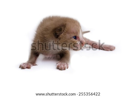Baby cat in paper side isolated, Lovely kitten - stock photo