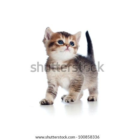 baby cat one month old - stock photo