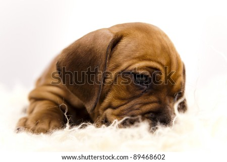 Baby dog - stock photo