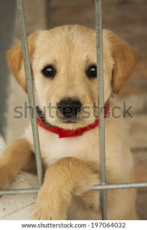 Baby dog. Golden retriever puppy in the cage - stock photo