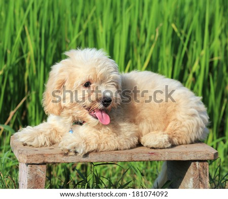 Baby dog on green field