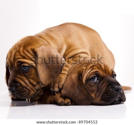 Baby dogs - stock photo