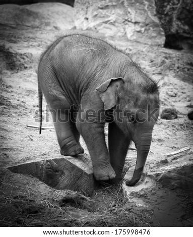 Baby Elephant - stock photo