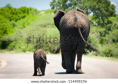 baby elephant and it's mama walking in sync - stock photo