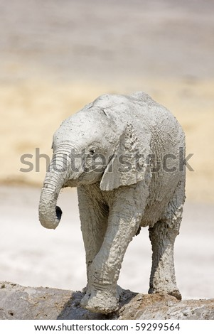 Baby elephant at waterhole full of white mud; Loxodonta africana