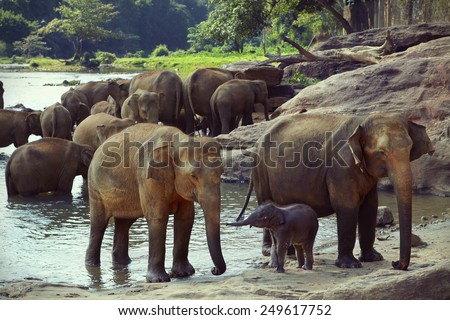 Baby elephant communicates with his mother - stock photo