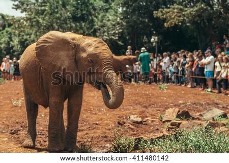 Baby elephant  in the  National park Nairobi, Kenya  - stock photo