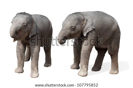 baby elephant, isolated - stock photo