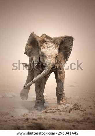 Baby Elephant (Loxodonta Africana) mock charging - Etosha National Park (Namibia) - stock photo