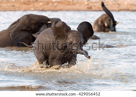 Baby elephant playing in a waterhole in Etosha National Park, Namibia