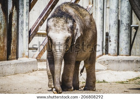 baby elephant playing with a log of wood - stock photo