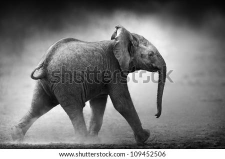Baby Elephant running in dust (Artistic processing) Etosha National Park - stock photo