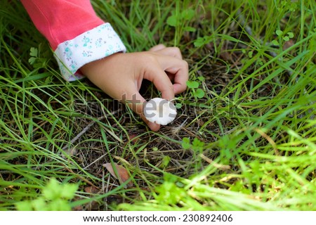 Baby girl hand carefully picking a white wild mushroom from the grass. - stock photo
