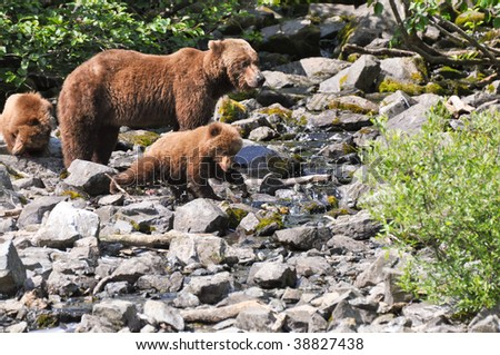 baby grizzly grabs salmon - stock photo