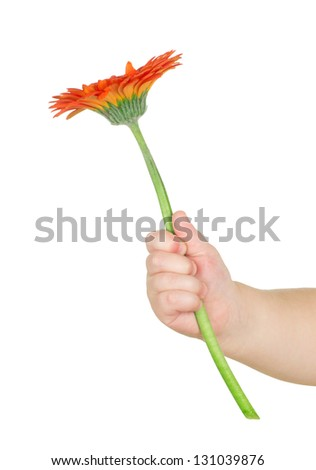 baby hand  holding  flower isolated on white