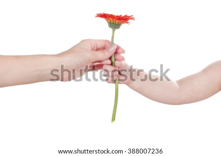 baby hand holding red flower