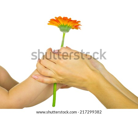 baby hand  holding red gerber daisy
