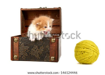 Baby kitten inside a wooden box looking at a wool ball