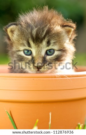 Baby kitty cat in the pot - stock photo