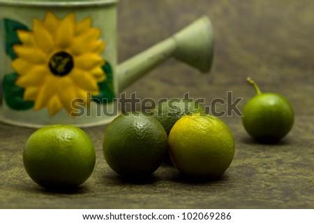 Baby mandarine oranges - stock photo