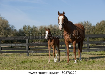 Baby mare and foal horse in pasture - stock photo