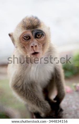 baby monkey in Thailand
