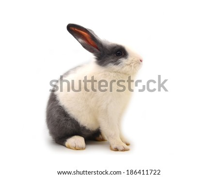 Baby of white&gray rabbit on white background - stock photo