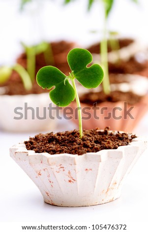 Baby plant-new life - stock photo