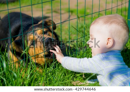 Baby plays with dog - stock photo