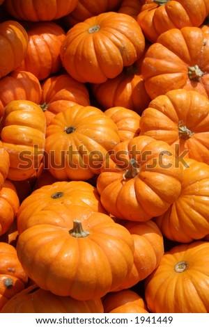baby pumpkin - stock photo