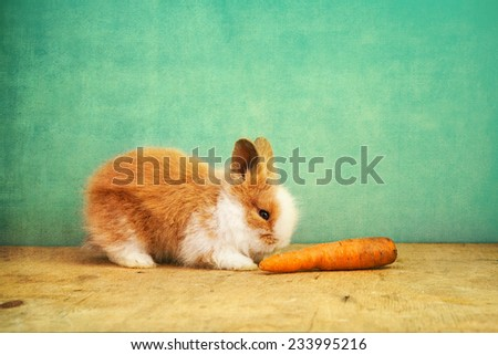 baby rabbit and carrot on retro blue background  - stock photo