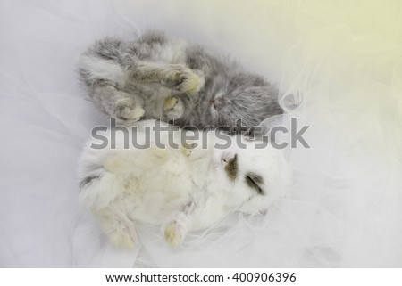 baby rabbit as dreamy theme on cloth with pastel light