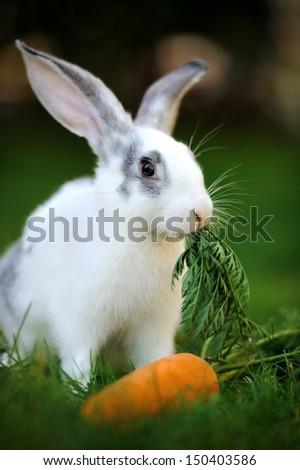 Baby rabbit in grass. Summer day - stock photo