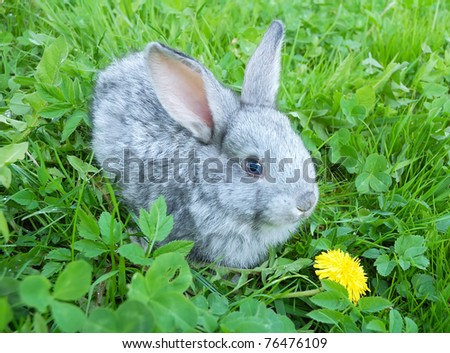 Baby rabbit in green grass