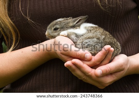 Baby rabbit in lady hands - stock photo