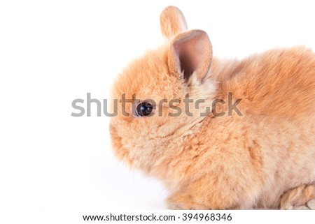 Baby rabbit isolated on a white background