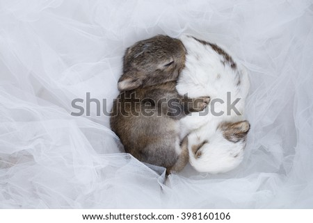 baby rabbit on light blue net - stock photo