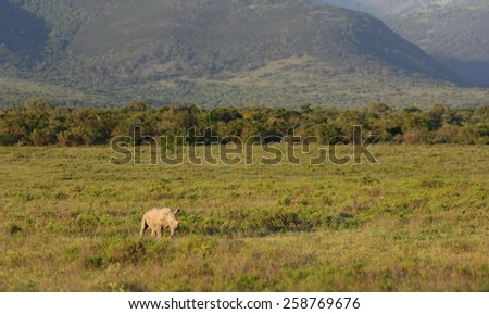 Baby rhino isolated and alone - stock photo