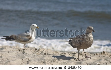 Baby Seagulls at beach