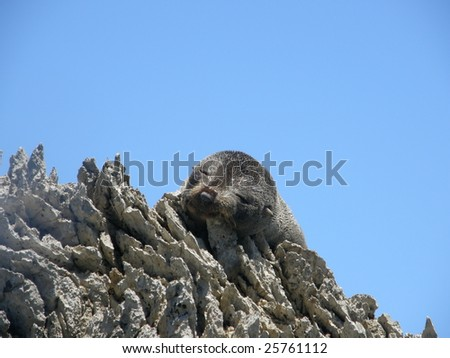 Baby seal on sharp rocks - stock photo