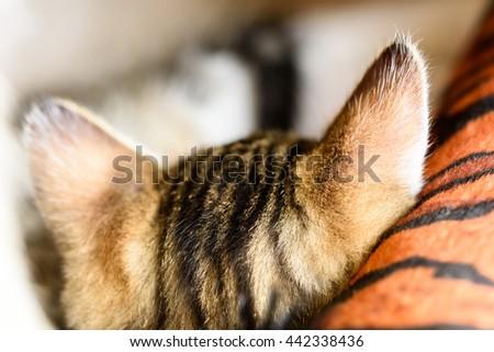 Baby Tabby Cat Sleeping In Kitty Basket - stock photo