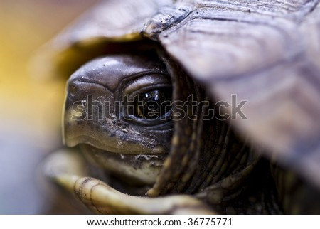 baby turtle closeup - stock photo