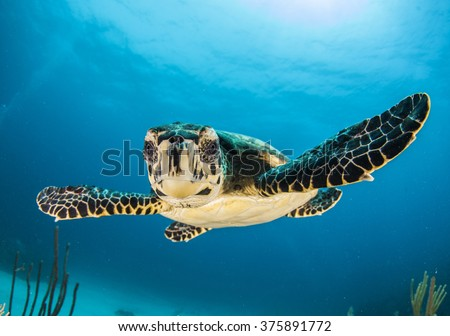 baby turtle face in Caymans - stock photo