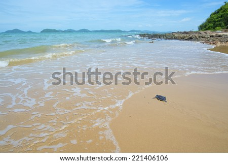 baby turtle toward the ocean - stock photo