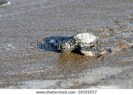 baby turtles - stock photo