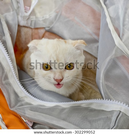 Baby white cat in plastic bag looking - stock photo