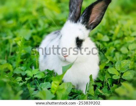 Baby white rabbit on grass - stock photo