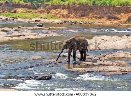 baby wild Elephant Asia bath in the river