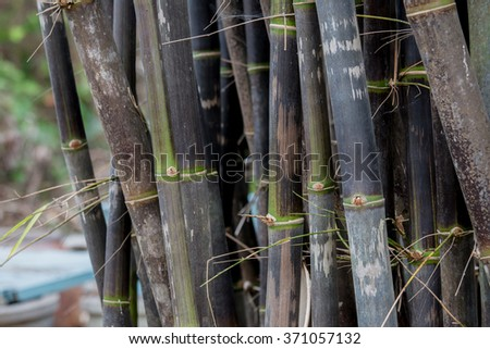 Back bamboo, bamboo species that are rare.